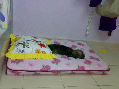 Share your furkid's bed and toy Sushib12
