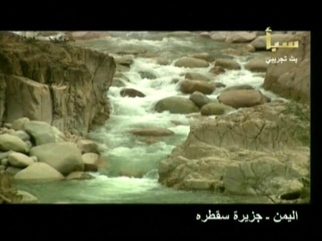 اليمن السعيد (سقطرة) 310