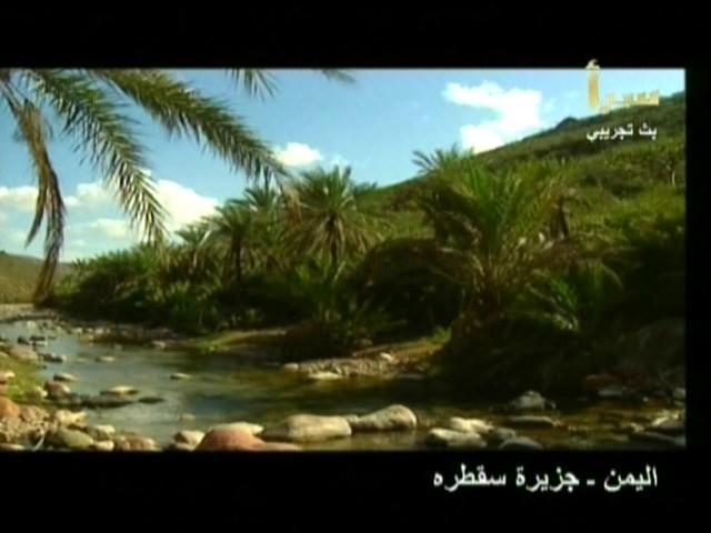 اليمن السعيد (سقطرة) 4210