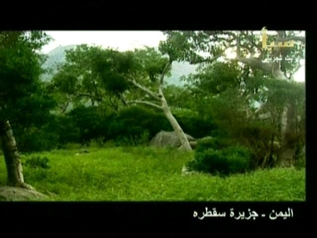 اليمن السعيد (سقطرة) 4610