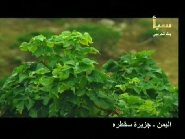 اليمن السعيد (سقطرة) 4910