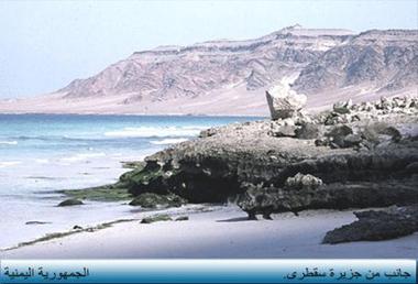 اليمن السعيد (سقطرة) Hedeeb10