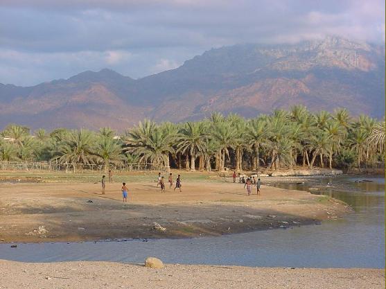 اليمن السعيد (سقطرة) Socotr11