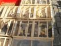 un marché aux animaux (tous les dimanches) Dsc01556