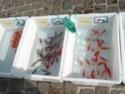 un marché aux animaux (tous les dimanches) Dsc01557