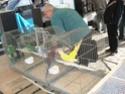 un marché aux animaux (tous les dimanches) Dsc01561