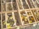 un marché aux animaux (tous les dimanches) Dsc01571