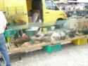un marché aux animaux (tous les dimanches) Dsc01573
