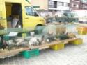 un marché aux animaux (tous les dimanches) Dsc01574