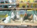 un marché aux animaux (tous les dimanches) Dsc01575
