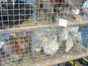 un marché aux animaux (tous les dimanches) Dsc01576
