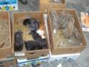 un marché aux animaux (tous les dimanches) Dsc01580