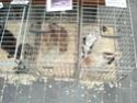 un marché aux animaux (tous les dimanches) Dsc01582