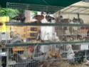 un marché aux animaux (tous les dimanches) Dsc01584
