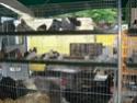 un marché aux animaux (tous les dimanches) Dsc01585