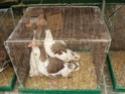 un marché aux animaux (tous les dimanches) Dsc01587