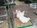 un marché aux animaux (tous les dimanches) Dsc01588