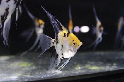 aquariums et débutants