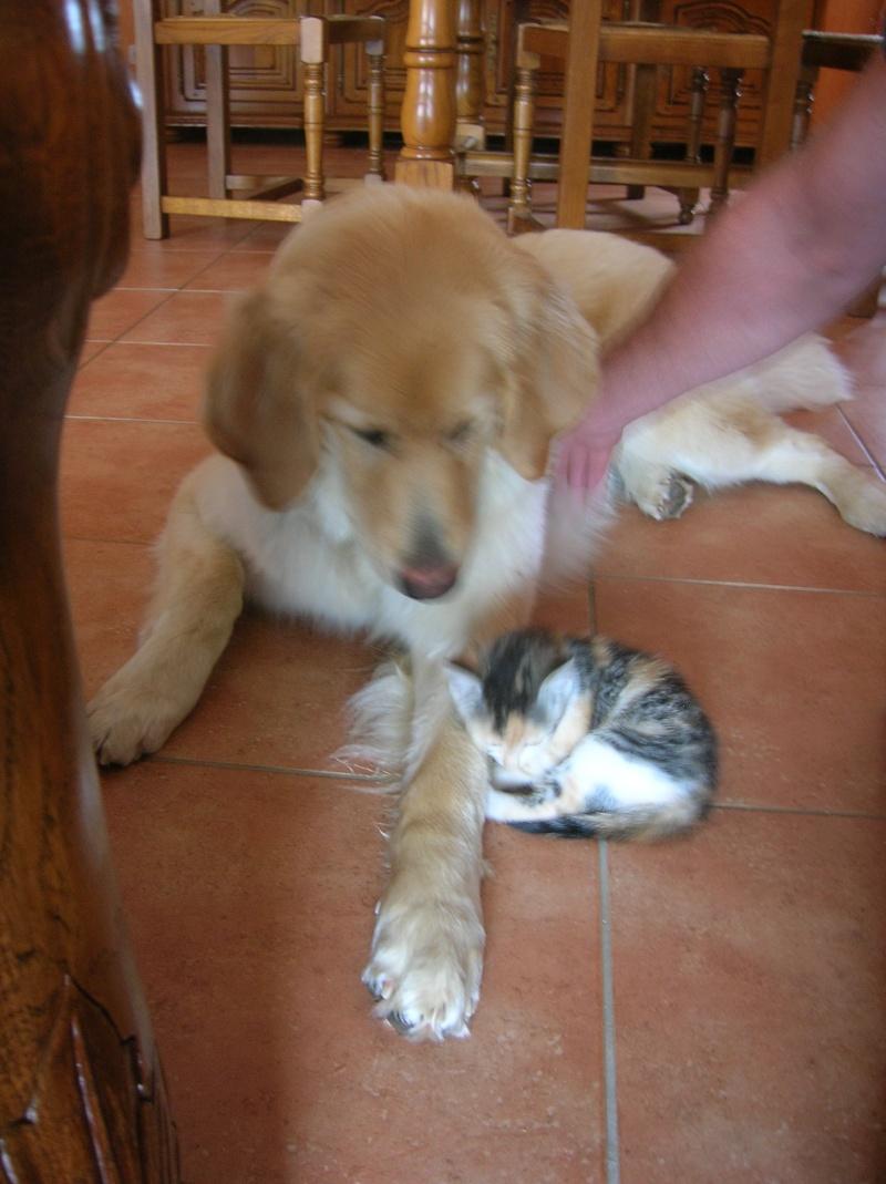 faire co-habiter chat et chien ? - Page 2 Dscn0910