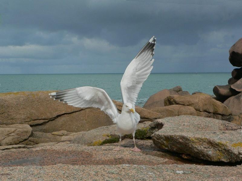 Animaux, oiseaux... etc. tout simplement ! - Page 2 Mouett10