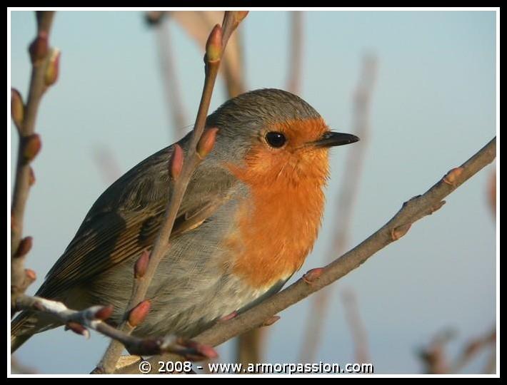 Animaux, oiseaux... etc. tout simplement ! - Page 4 P1090310