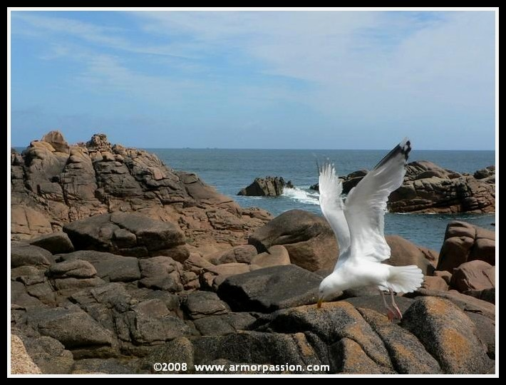 Animaux, oiseaux... etc. tout simplement ! - Page 5 P1140110