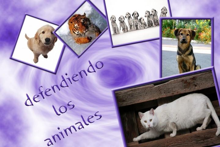 logo para defendiendo animales Sin_ti13