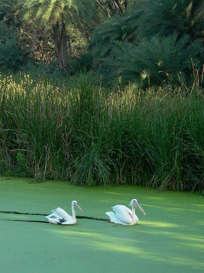 Paysages - Nature P1010310