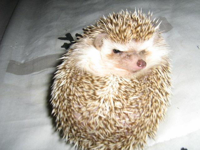 Voici mon ti Tom!!! Img_1214