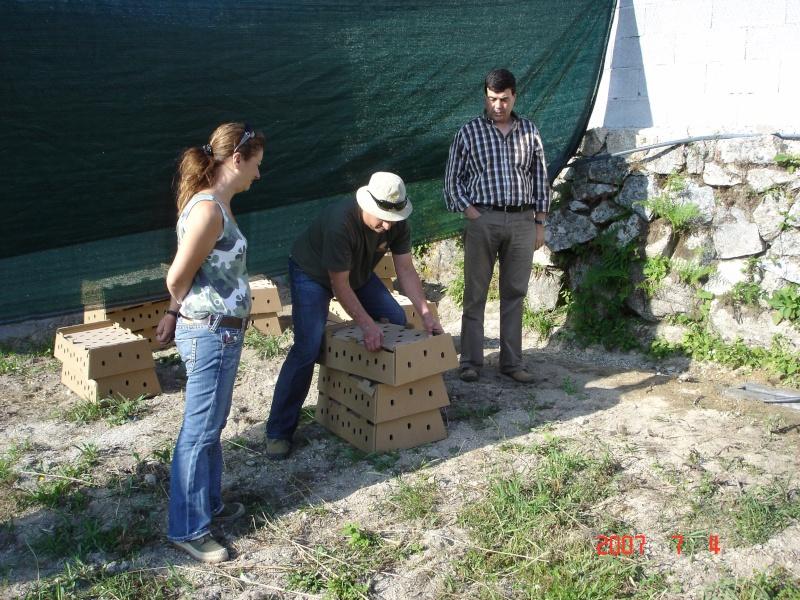 Forum gratis : Montemuro - Portal Dsc01312