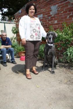 ce n'est pas un mastiff  mais un dogue allemand - Page 3 Img_8214