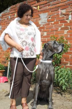 ce n'est pas un mastiff  mais un dogue allemand - Page 3 Img_8313