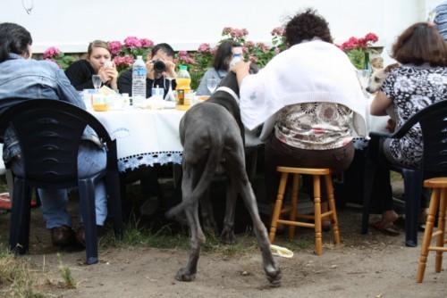 ce n'est pas un mastiff  mais un dogue allemand - Page 3 Img_8317
