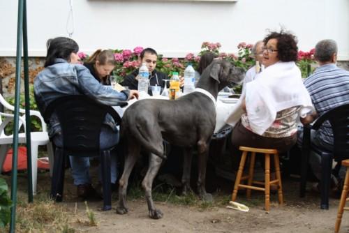 ce n'est pas un mastiff  mais un dogue allemand - Page 3 Img_8318