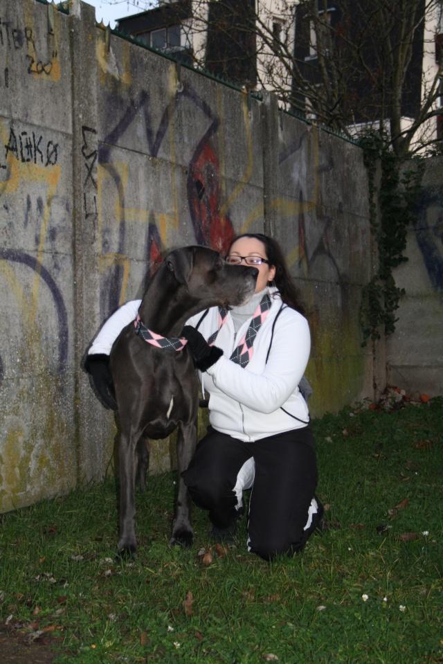 ce n'est pas un mastiff  mais un dogue allemand - Page 3 Img_8610