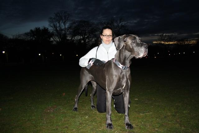 ce n'est pas un mastiff  mais un dogue allemand - Page 3 Img_8614