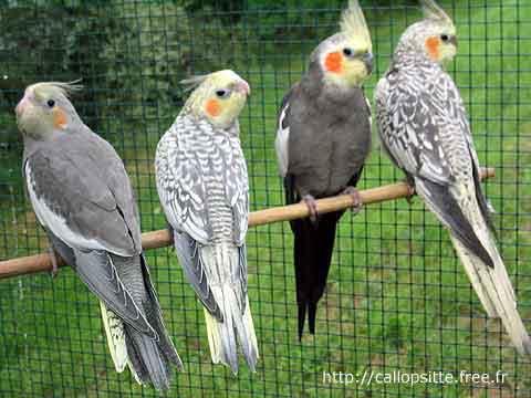 مراحل نمو طائر ........سبحان الله 2010