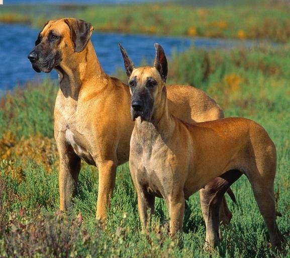 صور كلاب الصيد 1re10