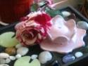 Цветята и растенията,според Фън Шуй! 559510