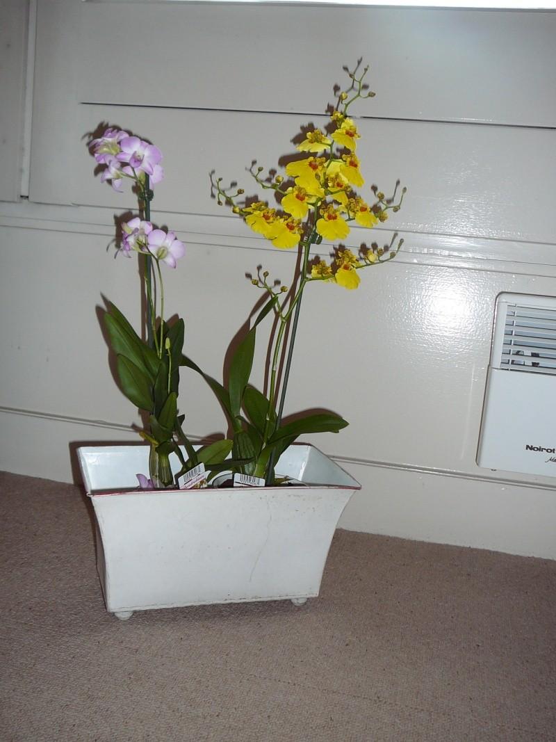 Ma première orchidée! - Page 2 Orchid10