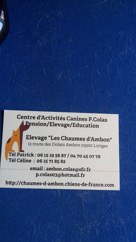 Post les chiens de Chantal - Page 9 8e6e0c10