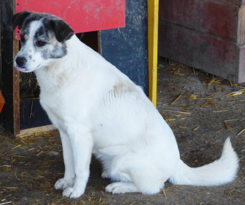 H E L P !  + de 4 ans et 10 mois et jusqu'à 5 ans et demi de captivité, pour ces chiens sauvés de la fourrière-mouroir en décembre 2015 ! - Page 4 Anouk10
