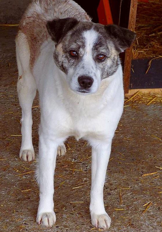 H E L P !  + de 4 ans et 10 mois et jusqu'à 5 ans et demi de captivité, pour ces chiens sauvés de la fourrière-mouroir en décembre 2015 ! - Page 4 Anouk_10