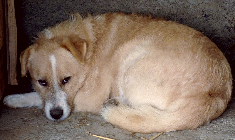 H E L P !  + de 4 ans et 10 mois et jusqu'à 5 ans et demi de captivité, pour ces chiens sauvés de la fourrière-mouroir en décembre 2015 ! - Page 4 Berlio15