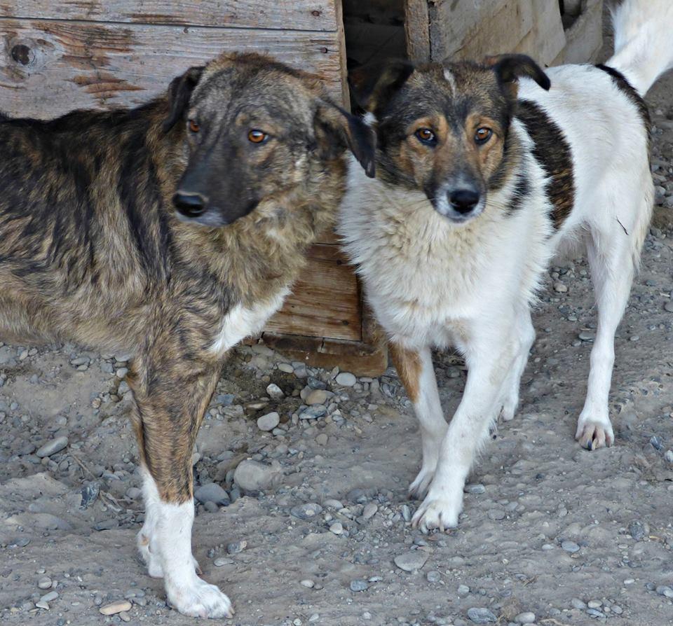 H E L P !  + de 5 ans et jusqu'à près de 6 ans de captivité, pour ces 4 chiens sauvés de la fourrière-mouroir en décembre 2015 ! - Page 5 Dundee10