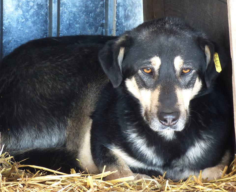 H E L P !  + de 4 ans et 10 mois et jusqu'à 5 ans et demi de captivité, pour ces chiens sauvés de la fourrière-mouroir en décembre 2015 ! - Page 4 Dunkin10