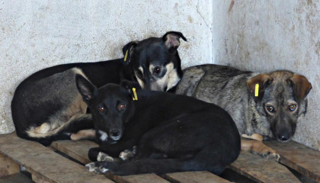 H E L P !  + de 5 ans et jusqu'à près de 6 ans de captivité, pour ces 4 chiens sauvés de la fourrière-mouroir en décembre 2015 ! - Page 5 Gump_k11
