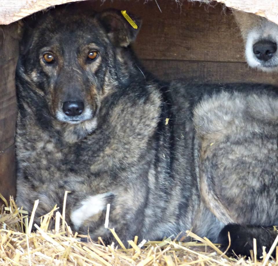 H E L P !  + de 4 ans et 10 mois et jusqu'à 5 ans et demi de captivité, pour ces chiens sauvés de la fourrière-mouroir en décembre 2015 ! - Page 4 Heiwa10