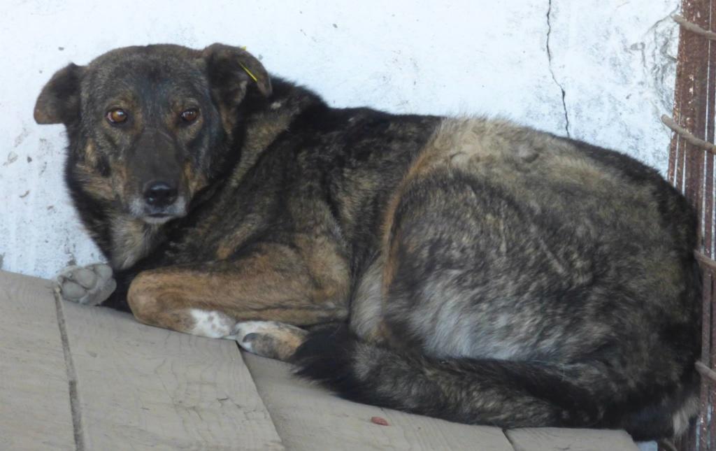 H E L P !  + de 5 ans et jusqu'à près de 6 ans de captivité, pour ces 4 chiens sauvés de la fourrière-mouroir en décembre 2015 ! - Page 5 Heiwa11