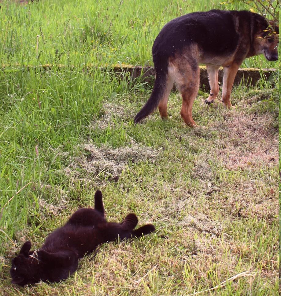 ENEE - mâle croisé Berger Allemand de taille grande, né environ août 2008 (PASCANI) - En FALD chez LiliDG (14) - Page 39 Img_0248